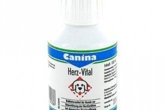 8 лучших витаминов для собак